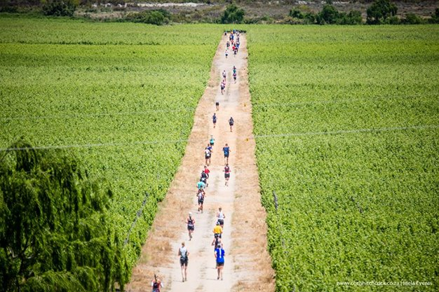 Runners finding their way through the lush green vineyards - Photo Credit:Chris Hitchcock