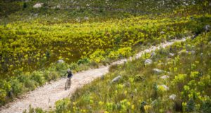 Stage One of the FNB Wines2Whales (W2W) Mountain Bike (MTB) Adventure kicked off at the picturesque Lourensford Wine Estate on Friday, 04 November 2016.  Cool weather conditions proving to be the norm at the FNB W2W MTB Adventure, the first destination stage of the event saw an impressive field of 1344 riders (672 teams of two) having to complete a 68km MTB route with a 1420m ascent, from Lourensford Wine Estate (Somerset West) to the festival village at the majestic Oak Valley Wine Estate (Elgin-Grabouw), home for the next two day.  Seen here:  Mountain bikers in action during Stage One of the FNB Wines2Whales (W2W) Mountain Bike (MTB) Adventure.  Photo Credit:  Tobias Ginsberg