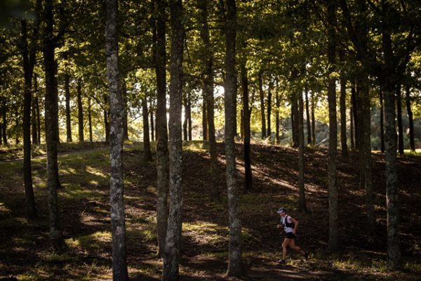 Lone runner traversing the tranquil forest at the Old Mutual Wild Series 3 Cranes Challenge - credit Em Gatland