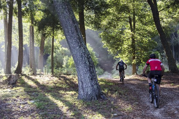 Stage one of the GR300 will take riders through many natural trails under the tree canopy of Knysna's indigenous forests. Photo: Julie Ann Photography