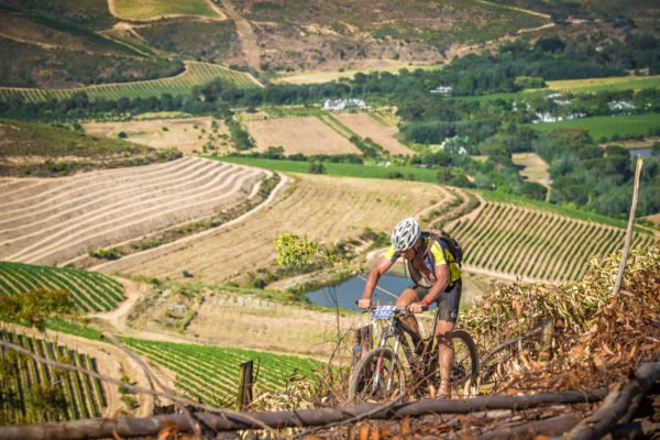 "Taking place on Saturday, 25 November 2017 and Sunday, 26 November 2017 South Africa's ""mountain bike party of the year"", the BUCO Origin Of Trails has welcomed  both a new start and finish venue in 2017. ""With the BUCO Origin Of Trails highlighting the brilliance of Stellenbosch, we are excited to announce that both stages of the 2017 event will start and finish at the Coetzenburg Soccer Field (Stellenbosch),"" says Michael Meyer, Managing Director of Stillwater Sports.  ""Each year we strive to build on the success of the previous year's event.  With the new venue being in the center of Stellenbosch riders will be able to experience the city's true radiance from start to finish."" Seen here:  Mountain bikers enjoying the brilliance of the City Of Oaks at the 2016 BUCO Origin Of Trails.  Photo Credit:  Tobias Ginsberg"