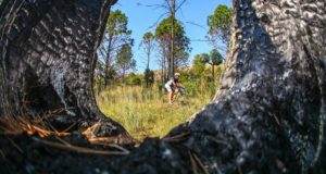 The final stage, which also forms part of the Two Day Experience, takes in the beautiful Kingskloof mountain bike trails. Photo by Oakpics.com.
