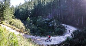 The forests of Plettenberg Bay set the scene for a short but punchy second stage. Photo by Oakpics.com.